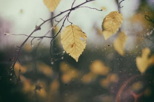 Leaves in the morning
